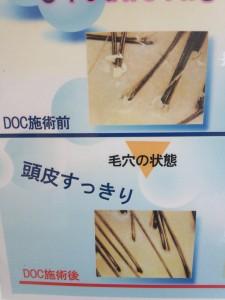 DSC_0496