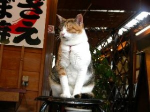 市丸の生招き猫